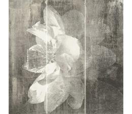 Antonella Bianco